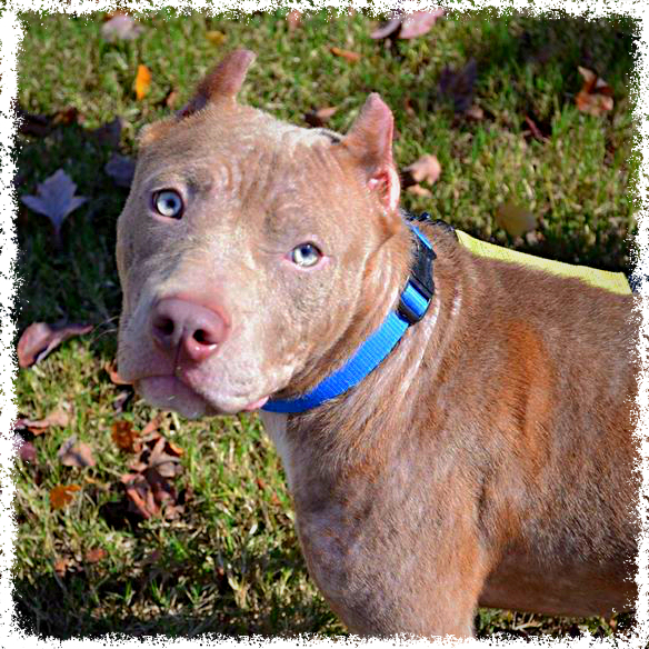 Ivy Layne Adopt-a-Bull