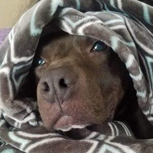 joey-snuggle